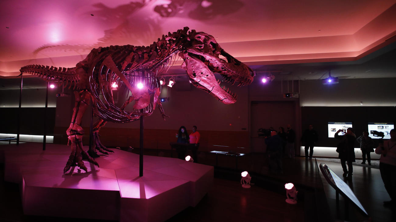 chi-ct-ct-ent-new-home-sue-t-rex-field-museum182-ct0088251613-20181218.jpg