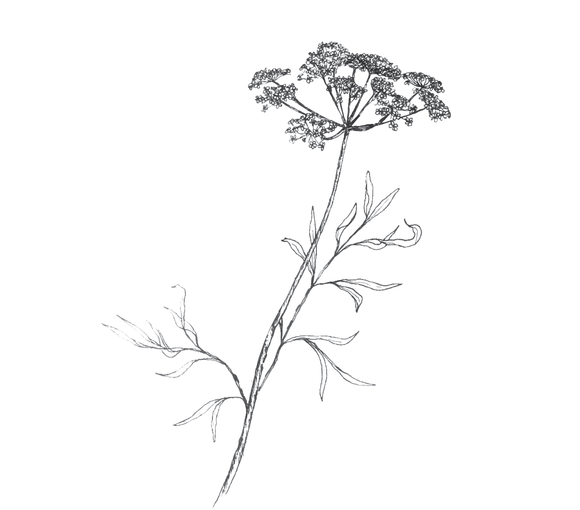 Twig-and-Briar-small-QAL.png