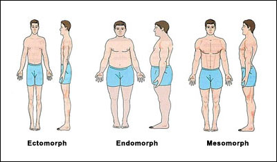 somatotype-body-types.jpg