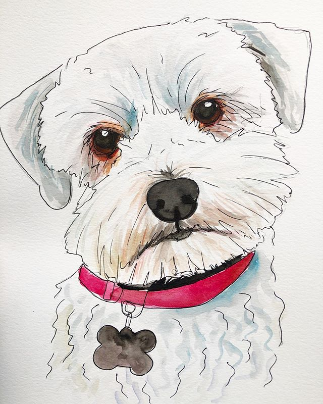 9x12 watercolor pup commission! swipe to see the original picture 🐶