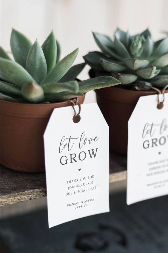 Mini Plants or Succulents are a great favour idea.  https://www.pinterest.ca/pin/818951513465591923/
