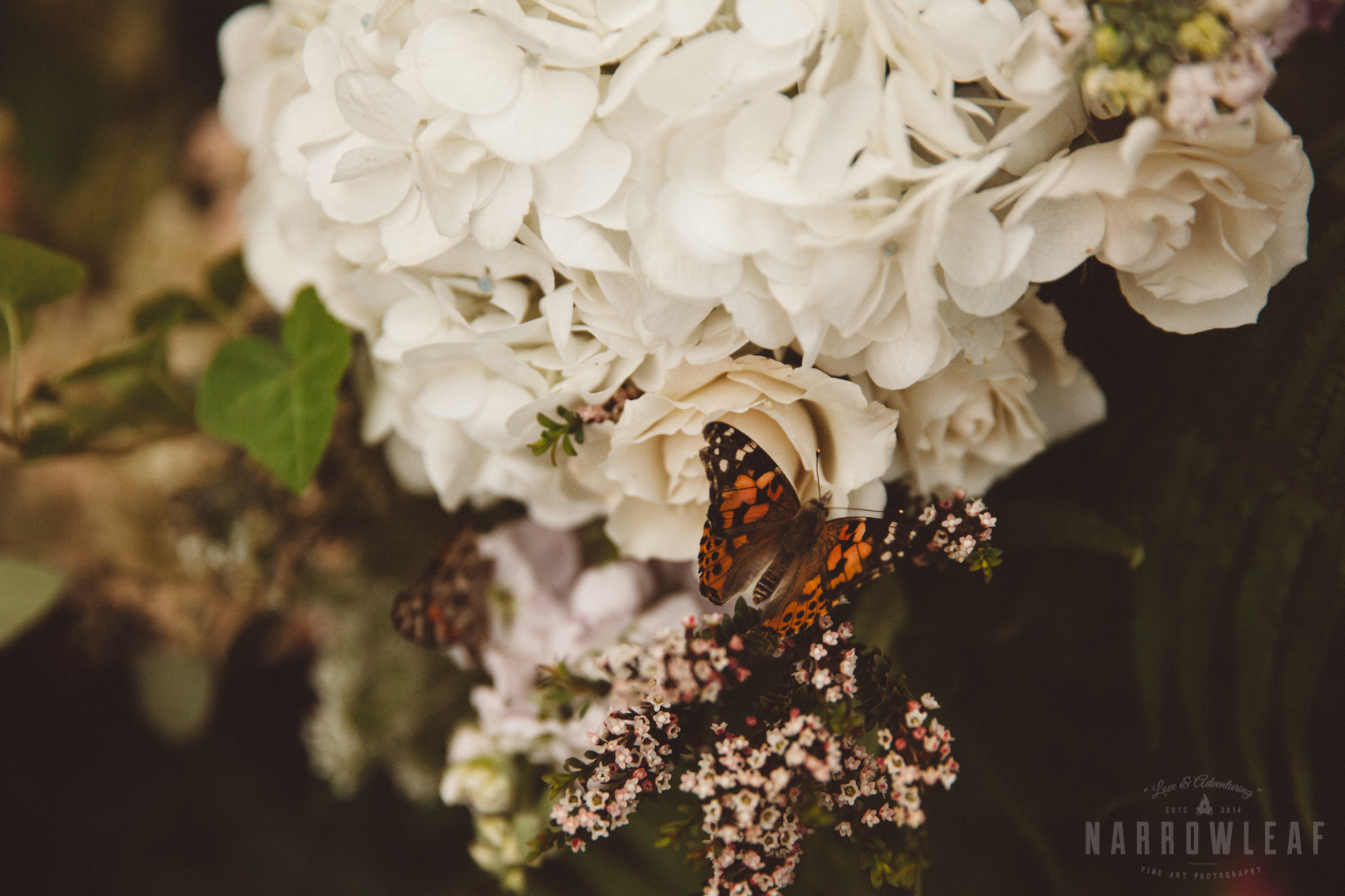 NarrowLeaf_Love_&_Adventure_Photography-8560.jpg