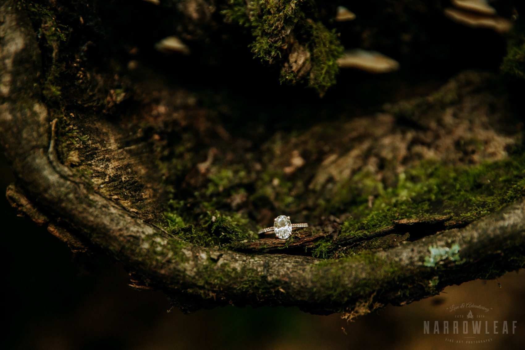Perrot-state-park-woodsy-engagement-NarrowLeaf-love-and-adventure-Photography-38.jpg
