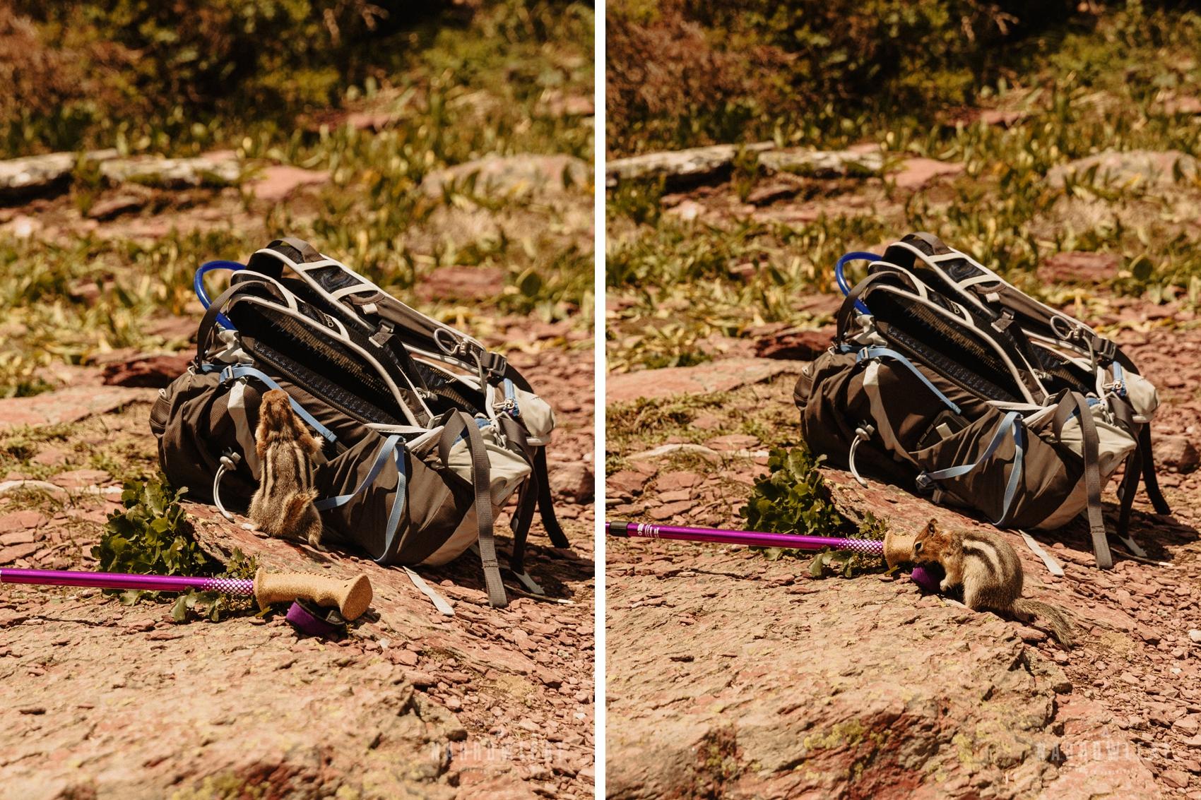 osprey-pack-chipmunk-montana.jpg