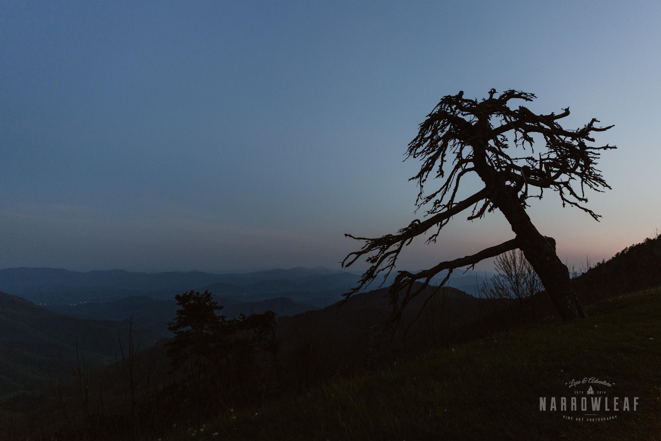 Blue-Ridge-mountains-North-Carolina-elopement-photographer-Narrowleaf_Love_and_Adventure_Photography-0410.jpg