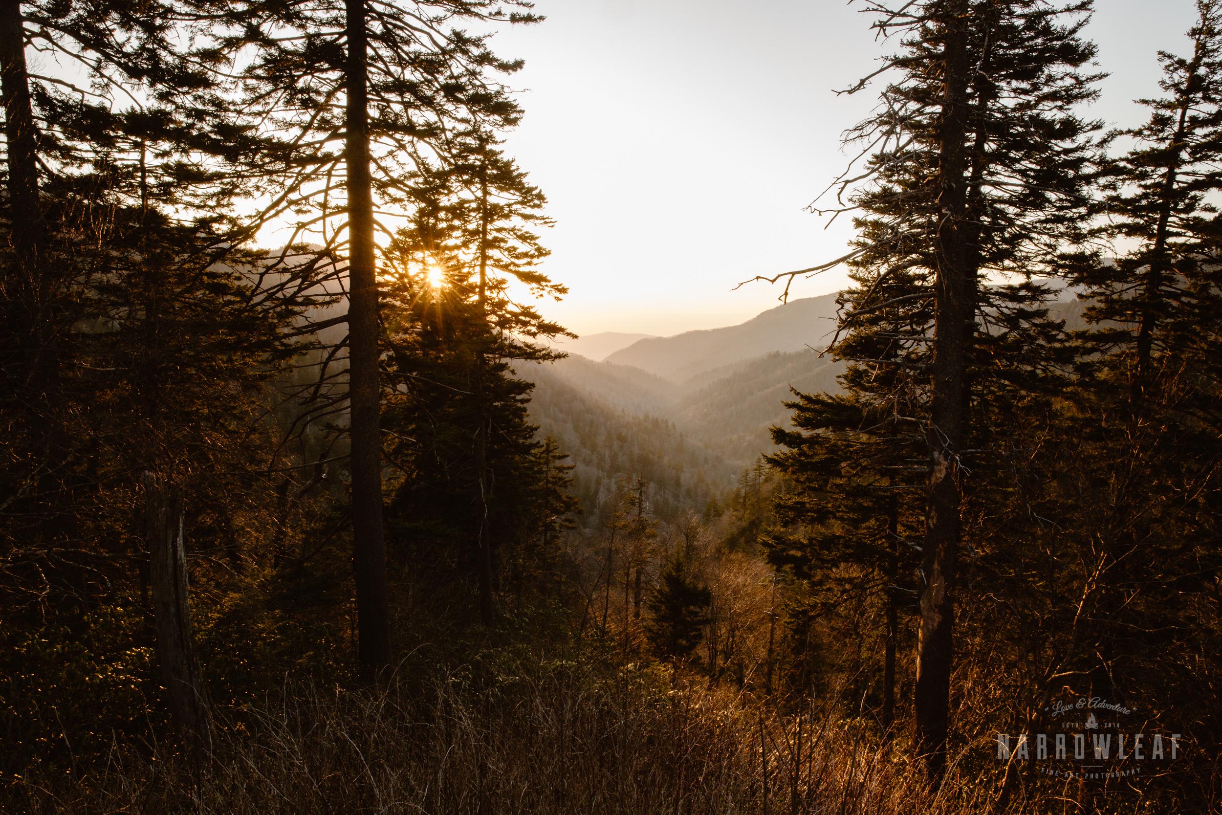Blue-Ridge-Parkway-North-Carolina-elopement-photographer-Narrowleaf_Love_and_Adventure_Photography-0101.jpg