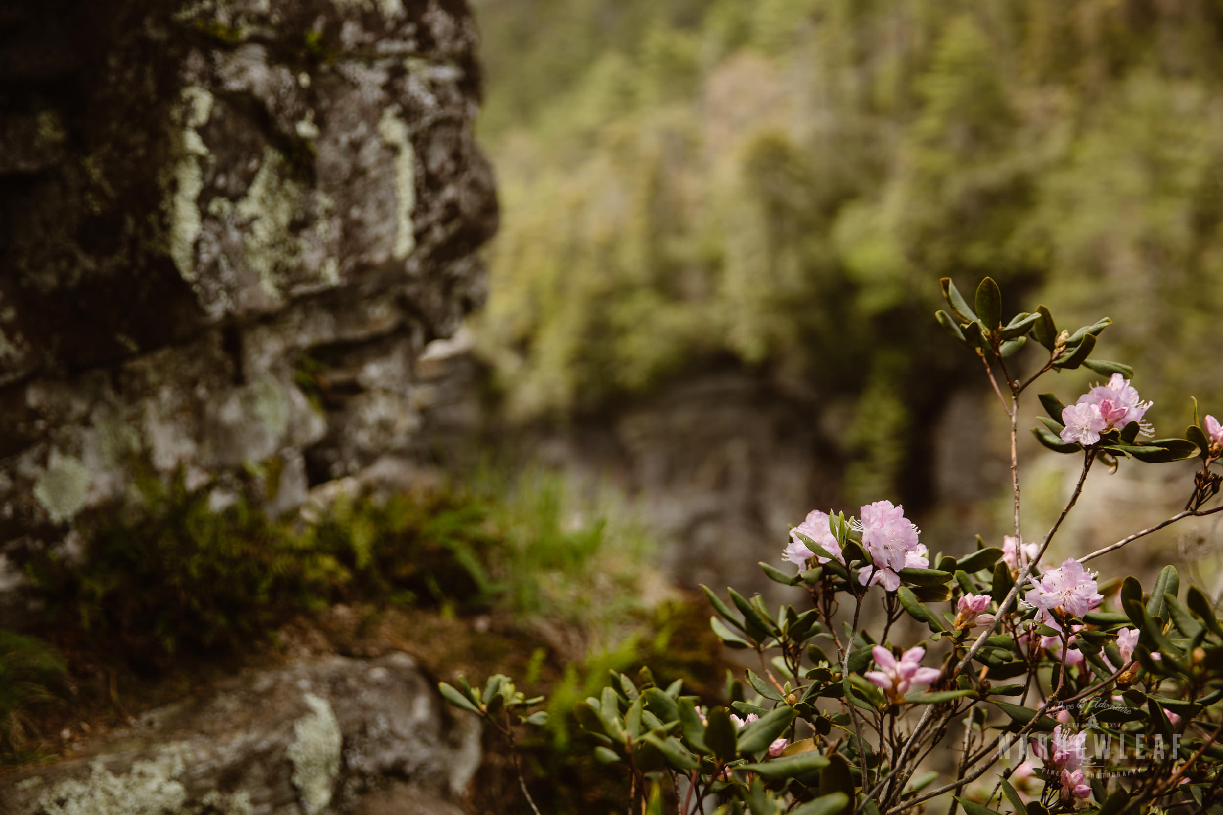 Hiking-Tennessee-waterfall-elopement-photographer-Narrowleaf_Love_and_Adventure_Photography-3088.jpg
