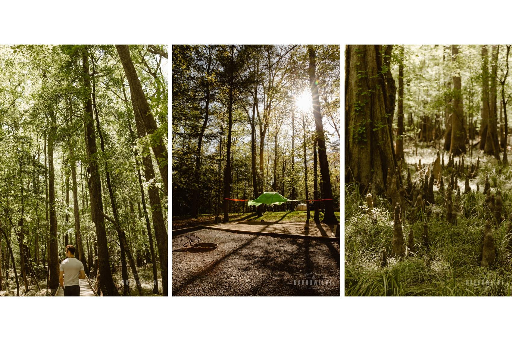 Congaree-national-park-north-carolina.jpg
