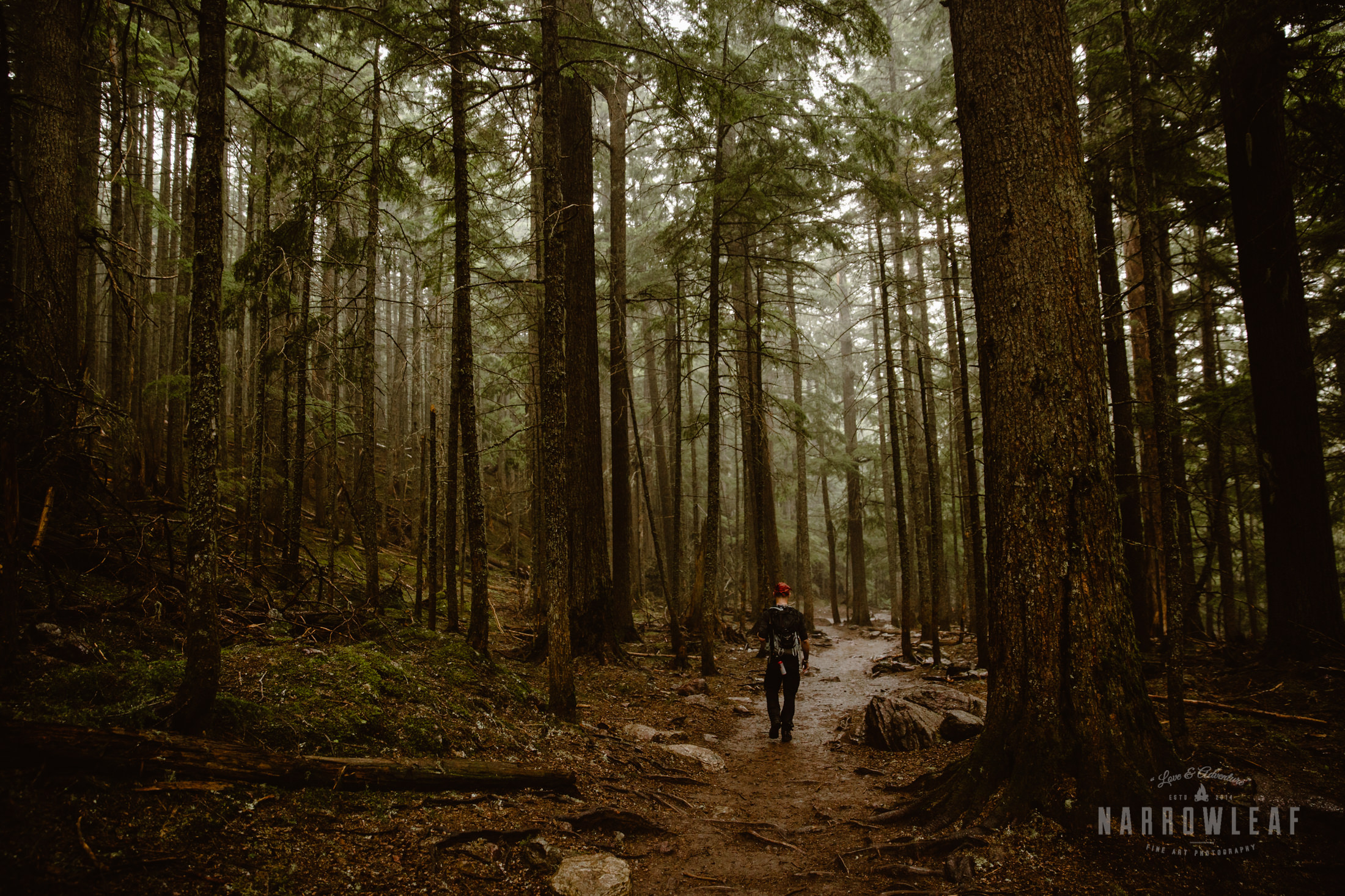 hiking-montana-forest-Narrowleaf_Love_and_Adventure_Photography-0254.jpg
