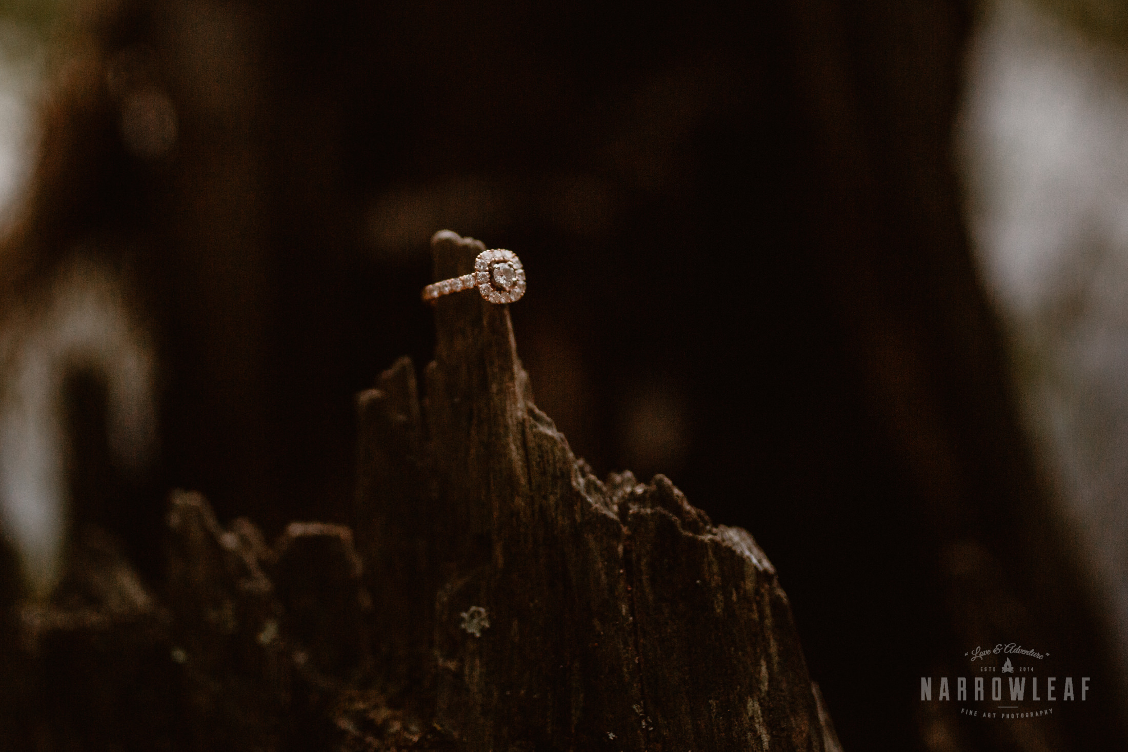 engagement ring on a log in Minnesota