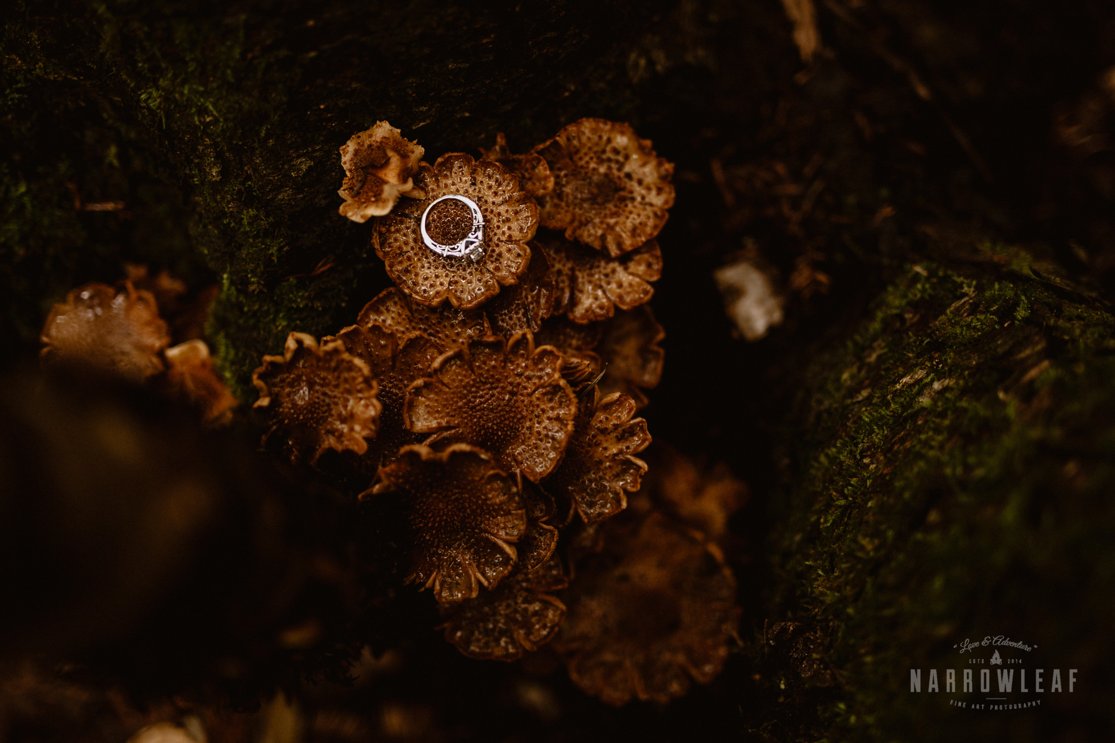 Minnesota-Hiking-Engagement-Photographer-Narrowleaf_Love_and_Adventure_Photography-Tettegouche-State-Park-6935.jpg