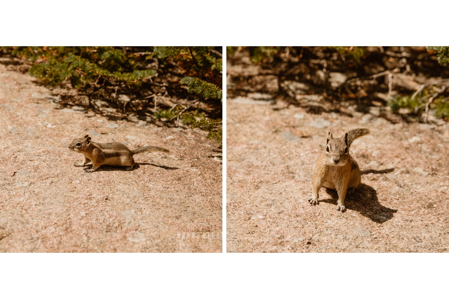hiking-adventure-photographer-narrowleaf-photography003-004.jpg