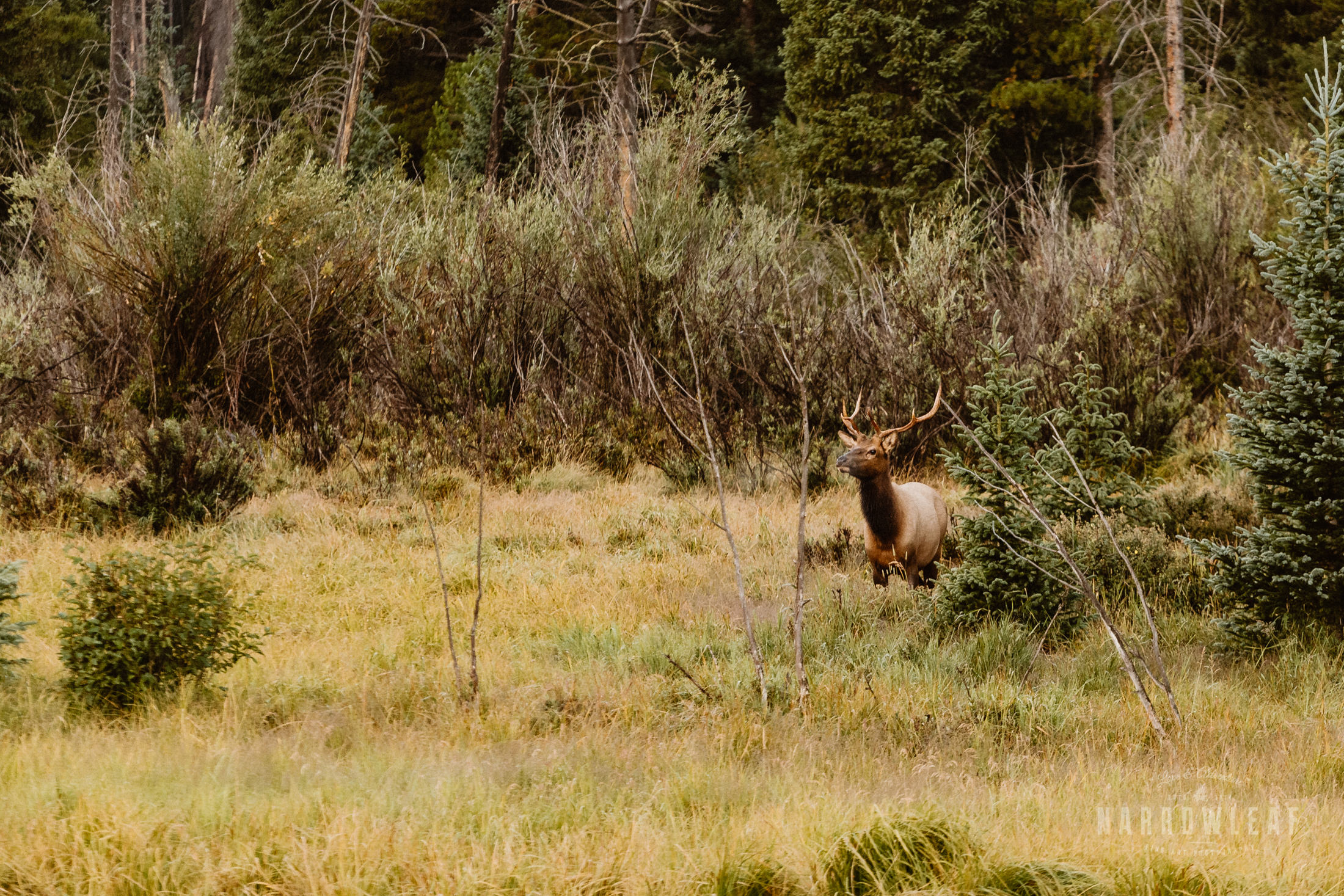 colorado-adventure-photographer-camping-rocky-mountains-Narrowleaf_Love_and_Adventure_Photography-4547.jpg