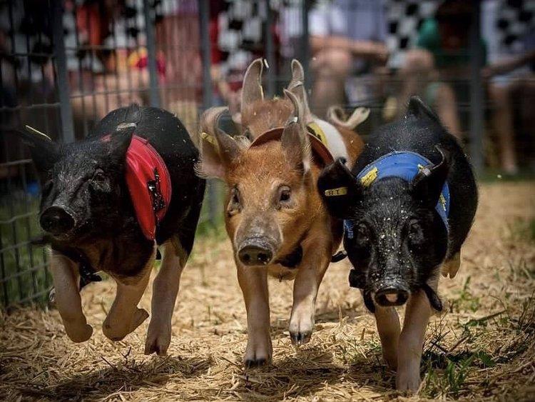 2019 Pig Races.jpg