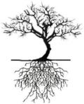 lmt tree.jpg
