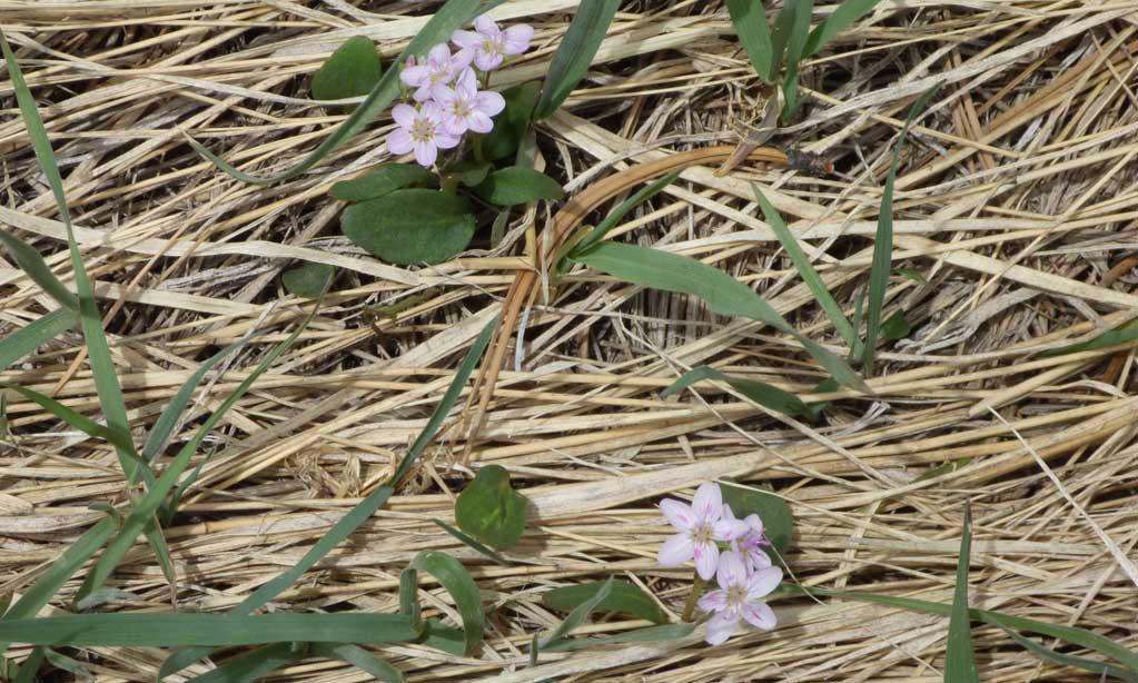 spring-03.jpg