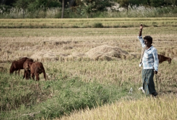 Indian Shepherd.jpg