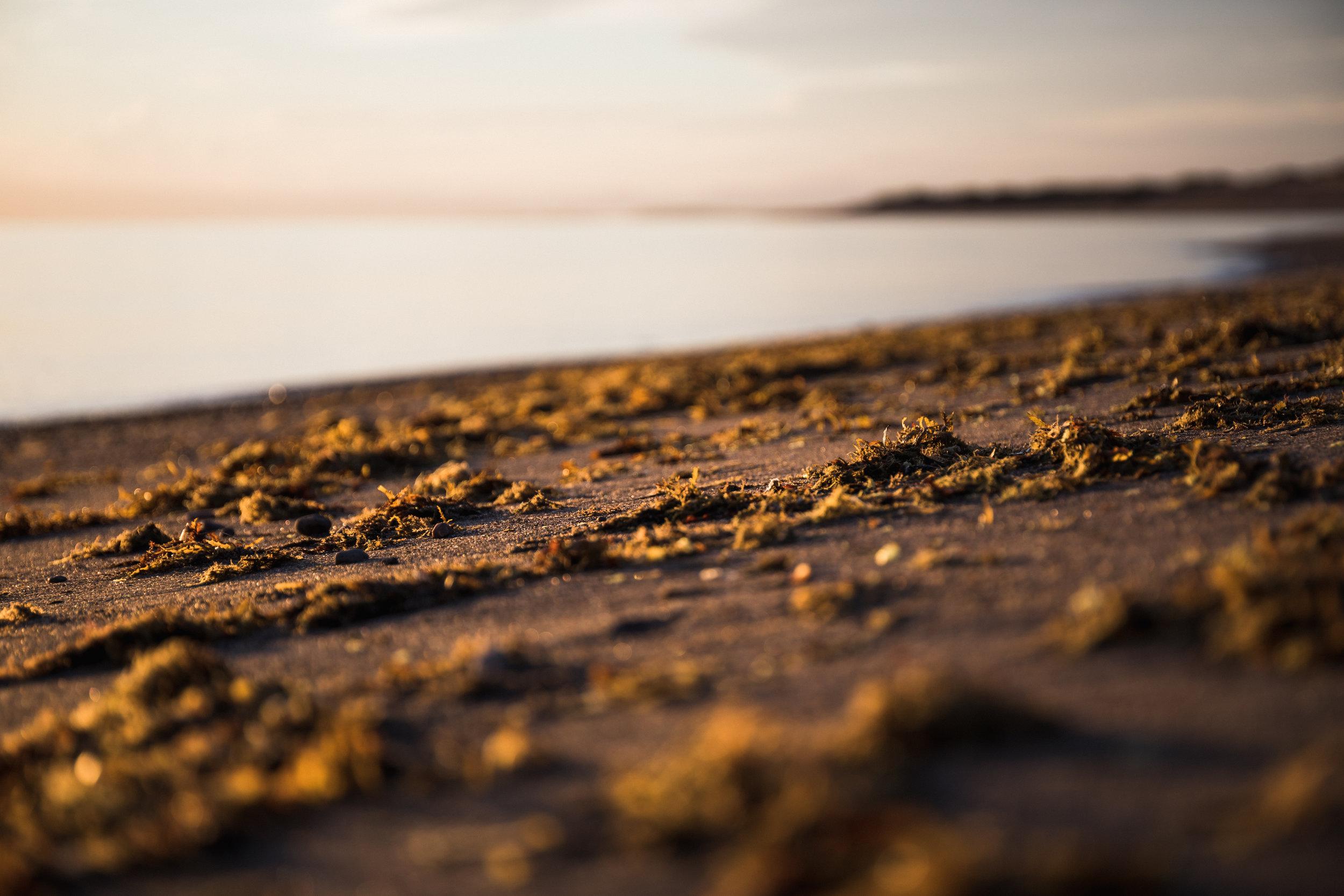 Collecting_Seaweed-5344.jpg