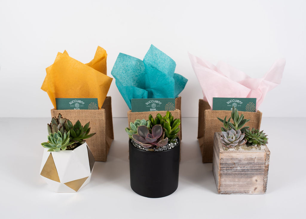 We offer large specialty containers with a trio of succulents, a burlap gift bag, and care instructions.