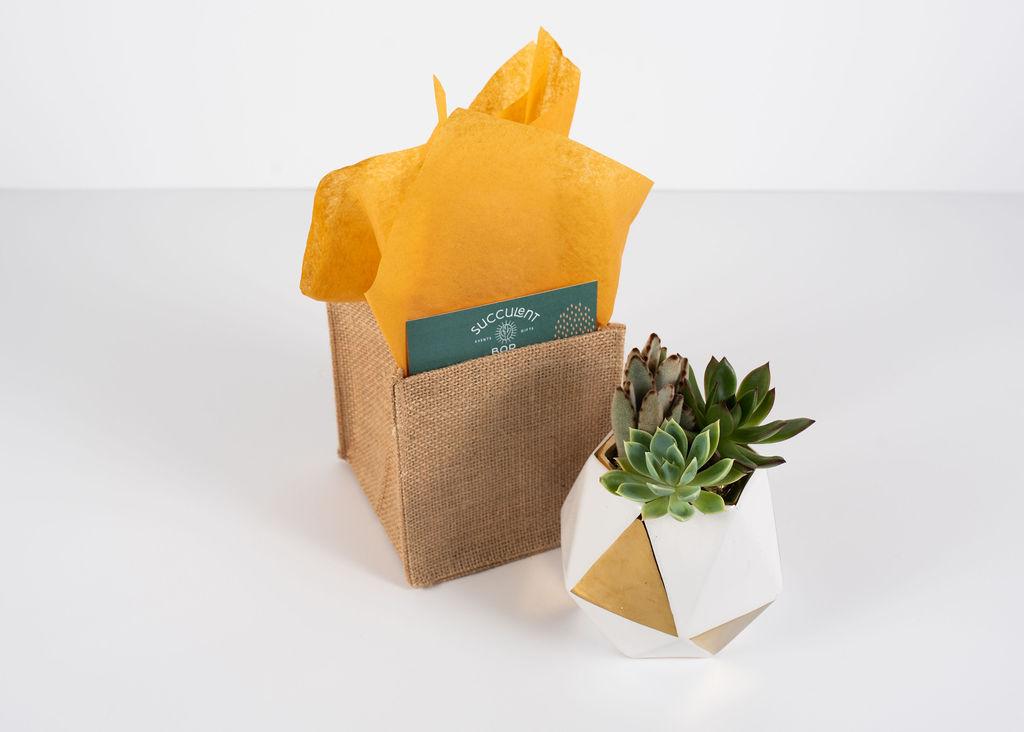 Geometric white & gold container trio