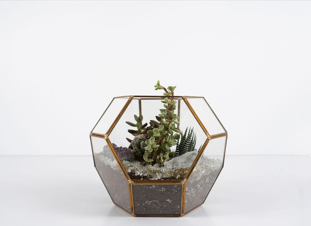 The 'Hexa Low' Terrarium