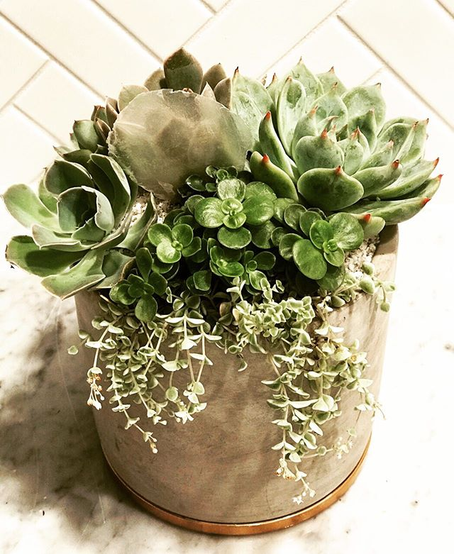 Can you spot the Capize shell 🐚? This concrete centerpiece with copper base is the perfect combo of cool, grey stone + warm, lush greenery. It always gets to me.  Don't mind me... just swooning over here! Happy Friday y'all!🌵🌿🌳