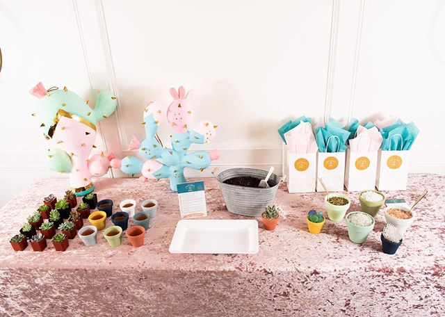 """Now shipping this setup to any event in the U.S. Our DIY Succulent Event Package is in full effect here. ⠀ ⠀ 📦 It works like this: you open the box of goodies we've prepared for you, unload and setup as pictured here, then BAM! your own Succulent Bar is done, and you're on to the next thing. Perfect for busy people that still want to throw a stylish party or corporate event. ⠀ ⠀ This setup is ideal for about 20-30 guests. Rest assured we include all the essentials from a 5""""x7"""" printed and framed 'Planting Instructions' guide to the soil in a decorative container with a shovel. ⠀ ⠀ This is the level of DIY that WON'T make your event look like a #PinterestFail and stress you out along the way! Lots of options for customization, just ask us how! ⠀ ⠀ I'll keep it real though... only thing NOT included is the Papier-mâché cactus' and pink velvet tablecloth, but literally every other detail from the gift bags, spoons, planting tray and more is! 🛍🥄🌵"""