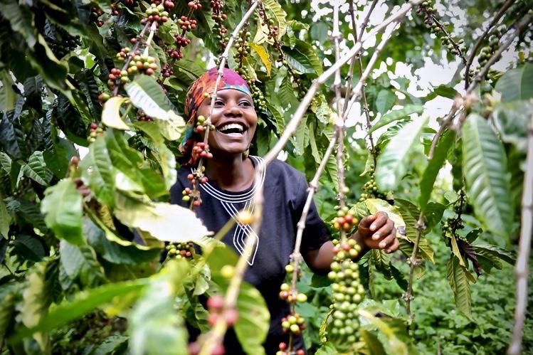Bungoma Mayekwe_Small-holder Farmer.jpeg