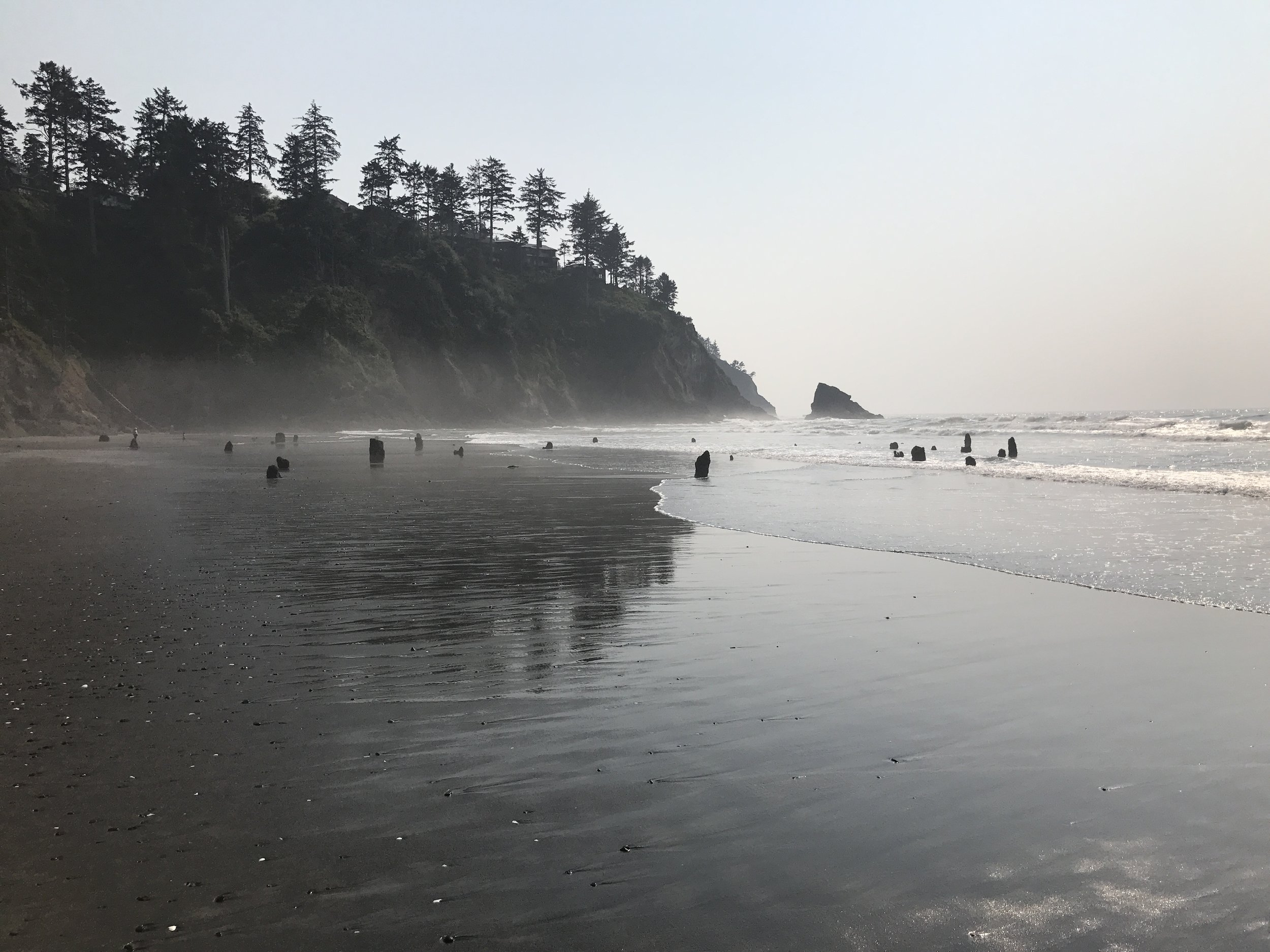 Neskowin_Ghost_Forest_August_2017.jpg