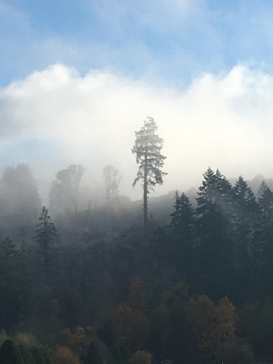 Cascadia through the Mist