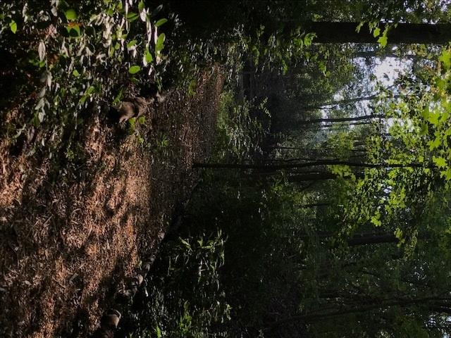 trail 8.jpg