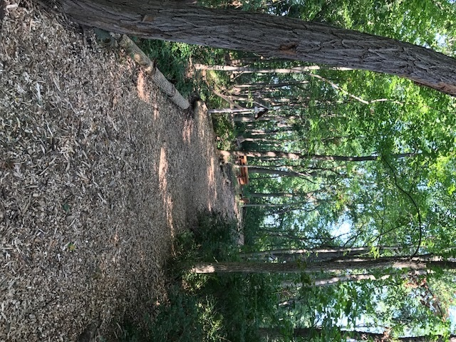 trail 10.jpg