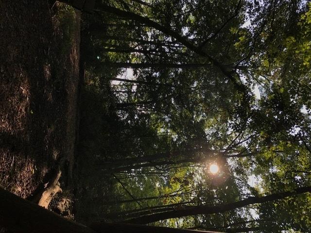 trail 12.jpg