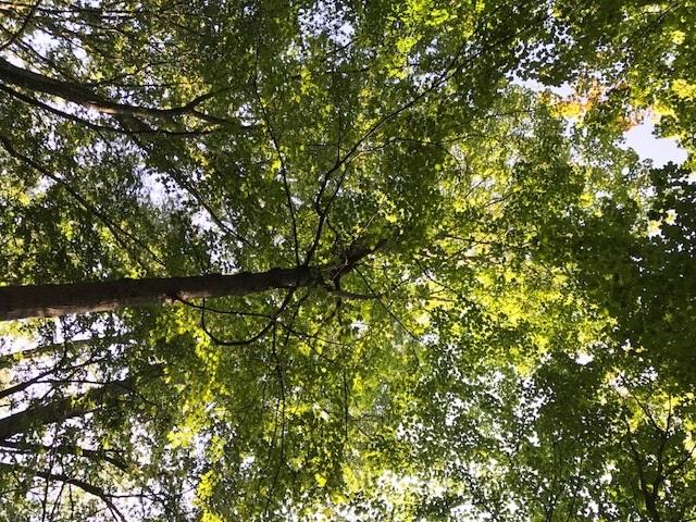 Trail 13.jpg