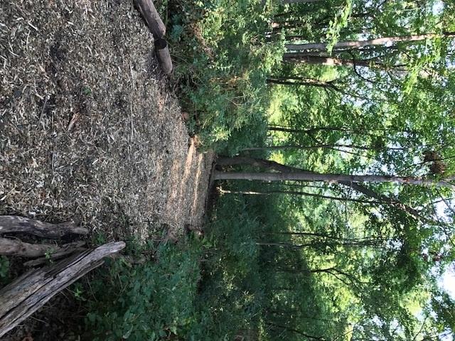 trail 14.jpg