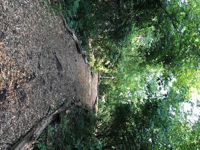 trail 20.jpg