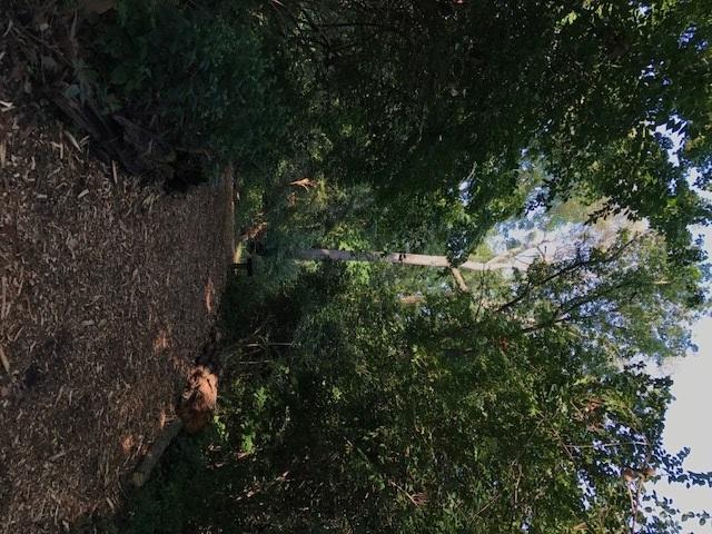 trail 21.jpg