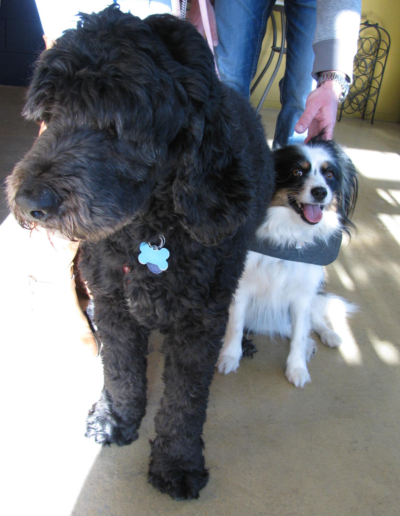 Sadie & Oliver.jpg