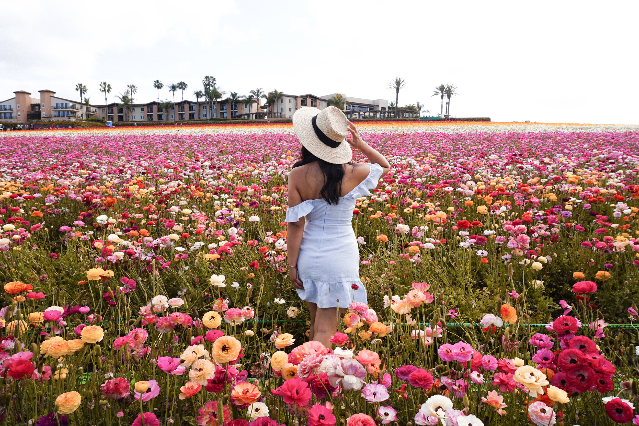 flower fields4.jpg