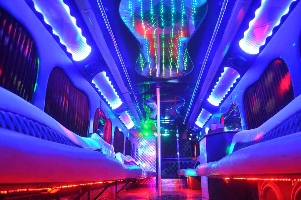 Dog Eyed View of Clean Looking Party Bus