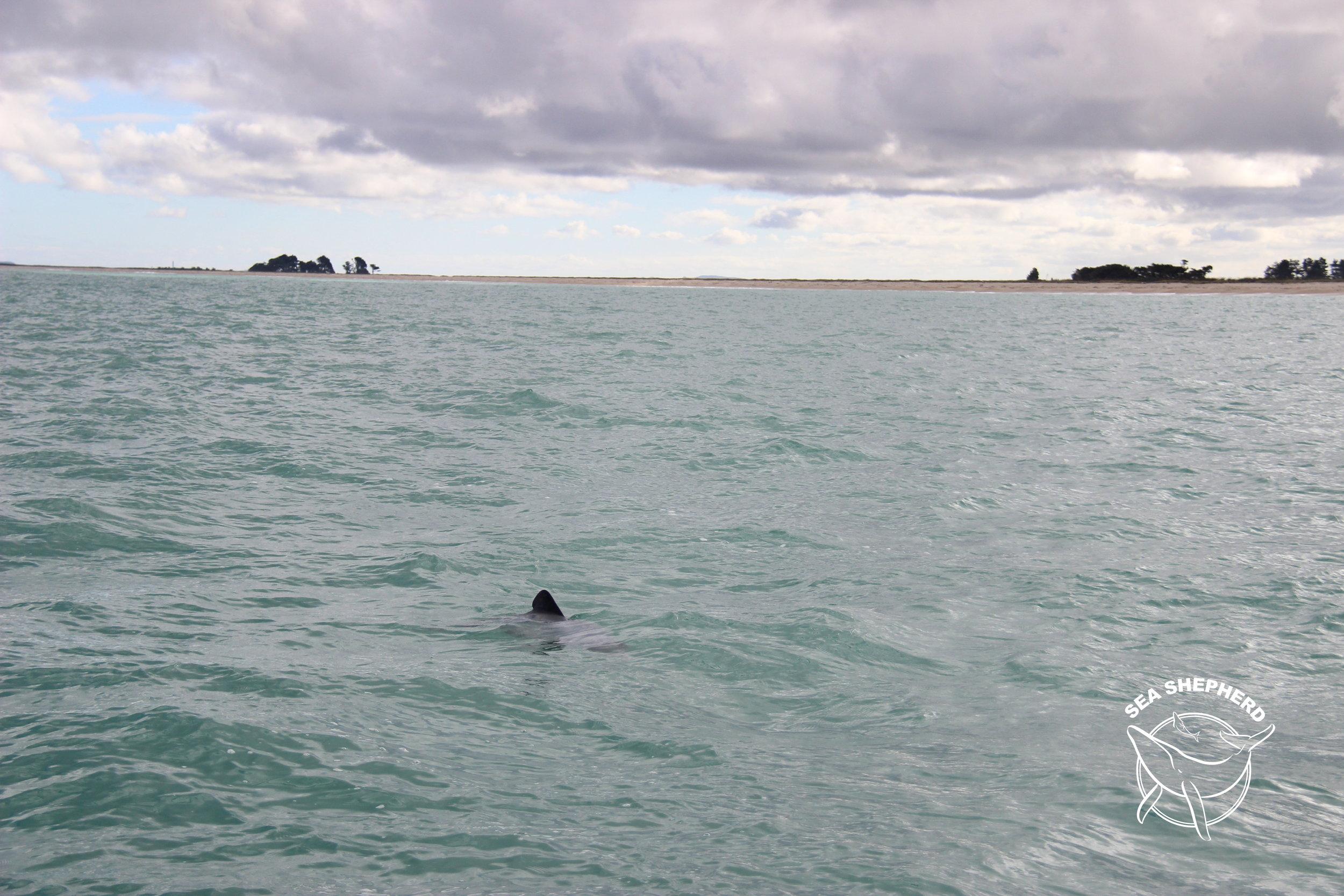 Pahu - Toetoes Bay