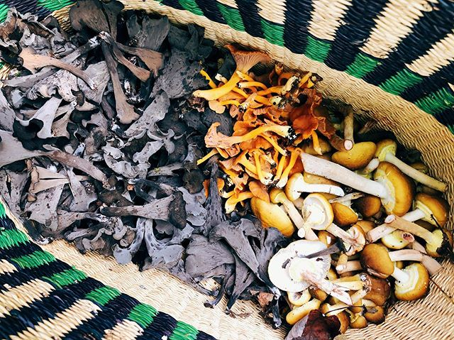 Peep my last post for a recipe for all the Black trumpets we found! More in the basket include: Yellow foot Chanterelles and Honey mushrooms! #whatsinyourbasket