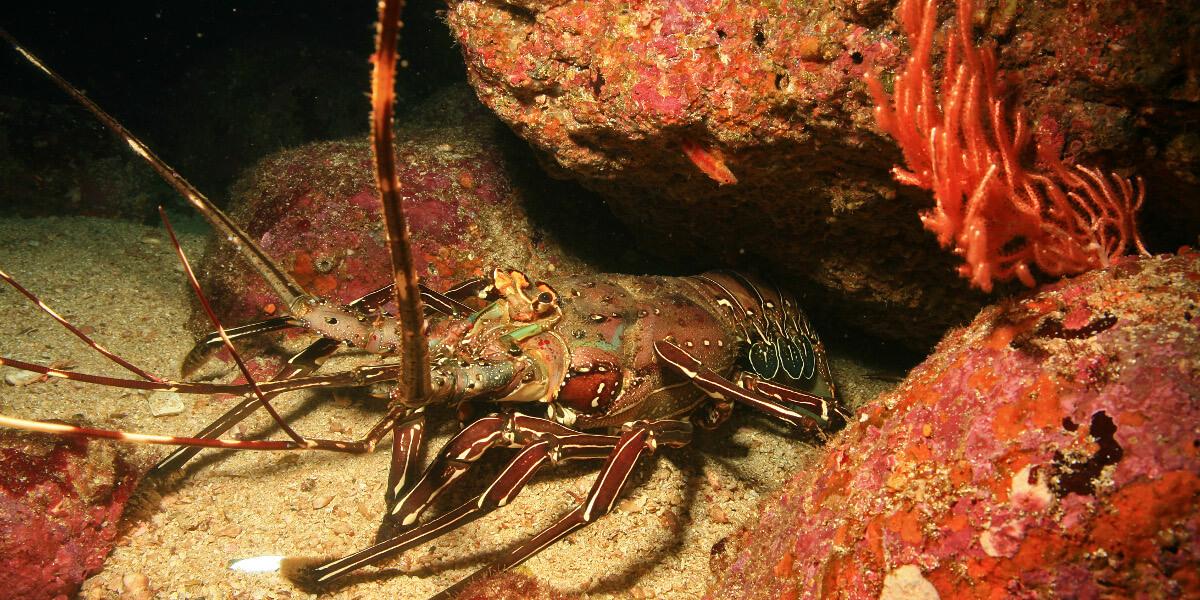 Lobster-1200x600.jpg