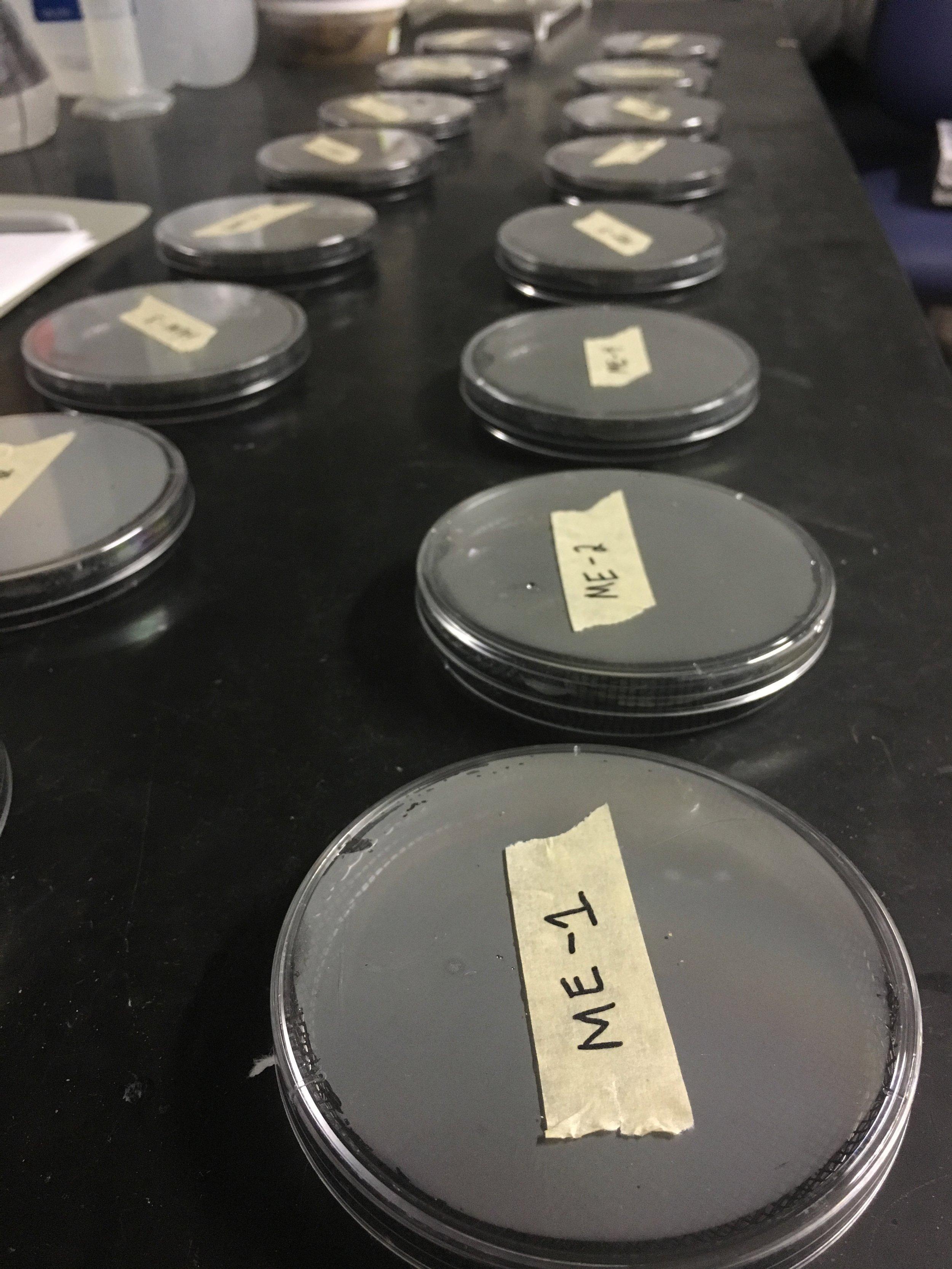 Gabor Lab,Texas State university -