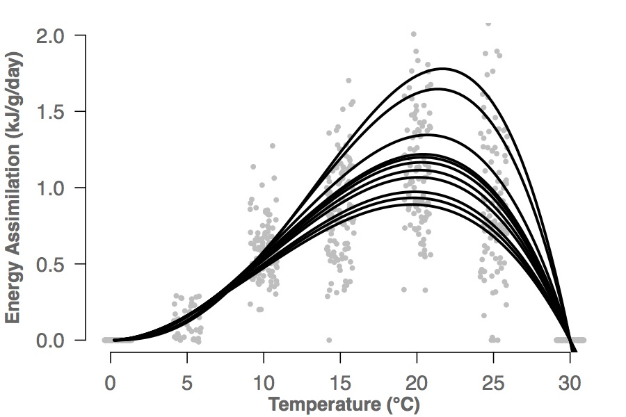 Performance - Do thermal sensitivity and thermal limits vary among populations? If so, is variation driven by environmental conditions and/or phylogenetic history? To explore these questions, we compared critical thermal limits (i.e., the highest and lowest temperatures a salamander can tolerate before losing critical motor functions) and energy assimilation (i.e., the amount of ingested energy remaining after egestion) among populations. To determine the drivers of variation in these traits, we ran models to determine the relative importance of environmental temperatures and phylogenetic clade.Click here to learn about the relationship between energy assimilation and gut microbesSee Chapter 3 of my dissertation for more information about thermal limits