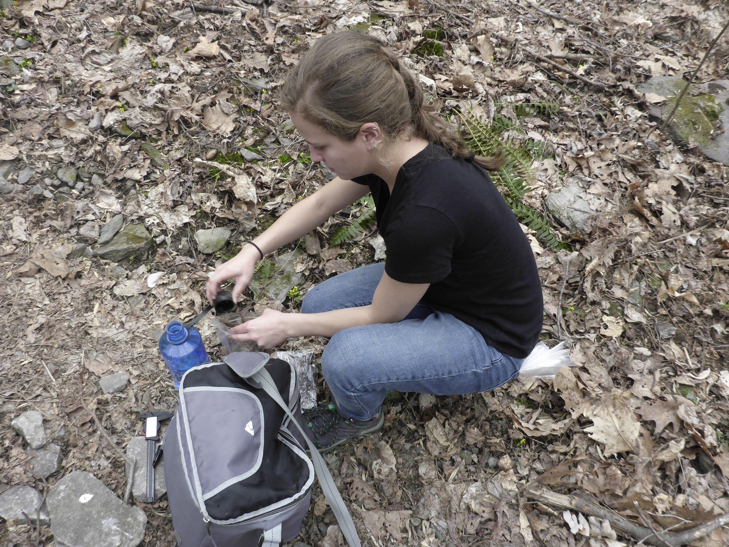 Tori packing up some salamanders