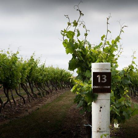 peter-teakle-winery-port.jpg