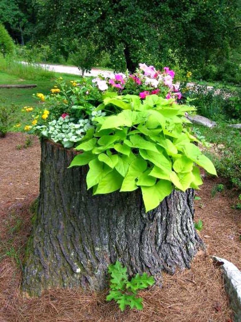 Tree Stump - Find a new purpose for an old tree stump that was leftover from last Spring's wood chopping.
