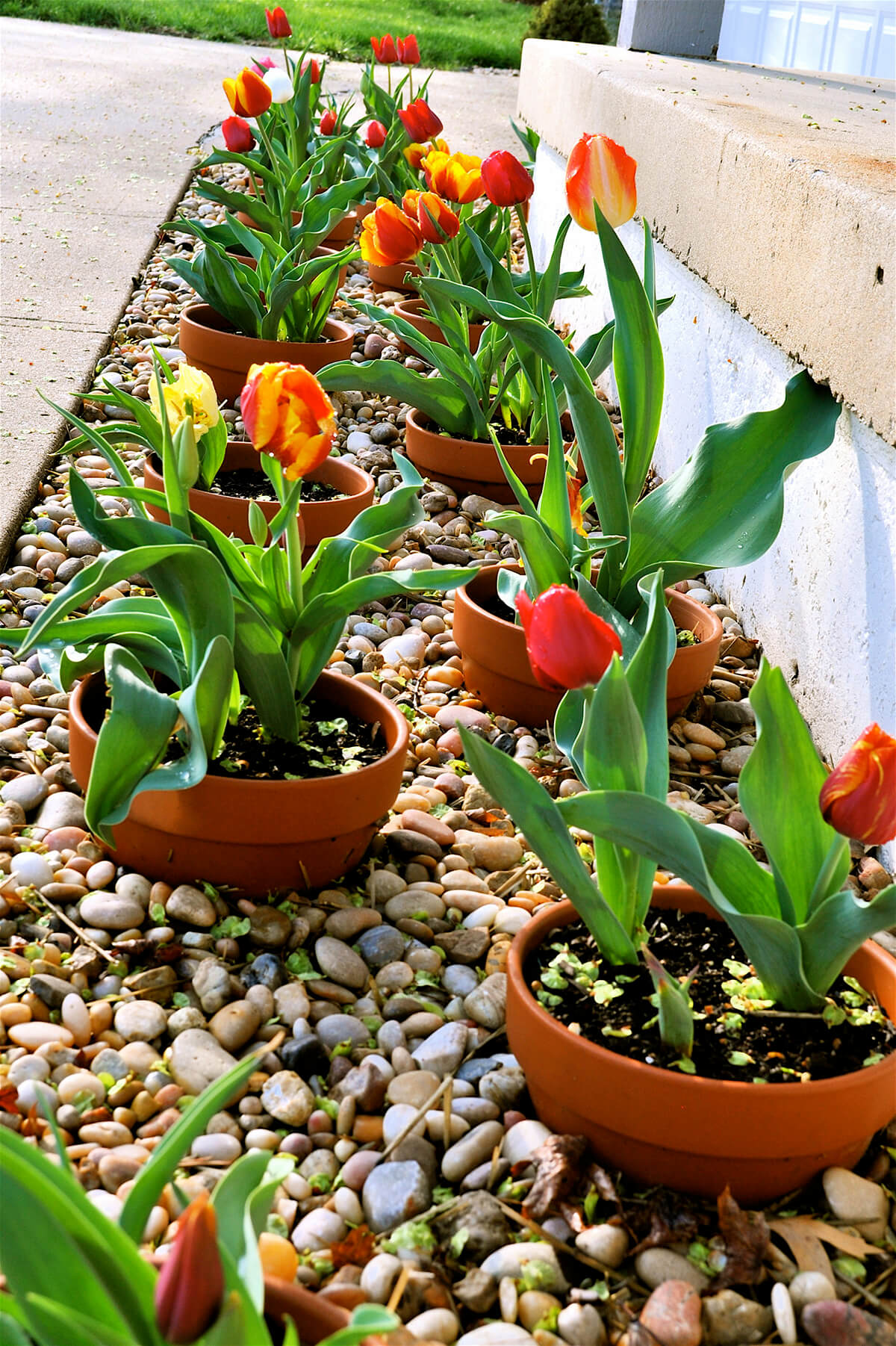 Clay Pot Flower Bed - Get creative with your clay pots moving them from above ground to under ground. Surround your favorite tulips with rocks and the squirrels will be utterly confused on their next visit.