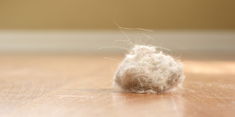 Clean the dust bunnies - While you're given a clean slate, get rid of all the dust that currently resides in the cracks & crevices of your new home.